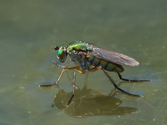 Wie Lange Fliegen Wespen